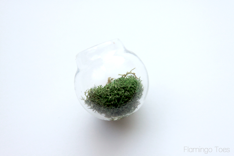 Moss in little globe