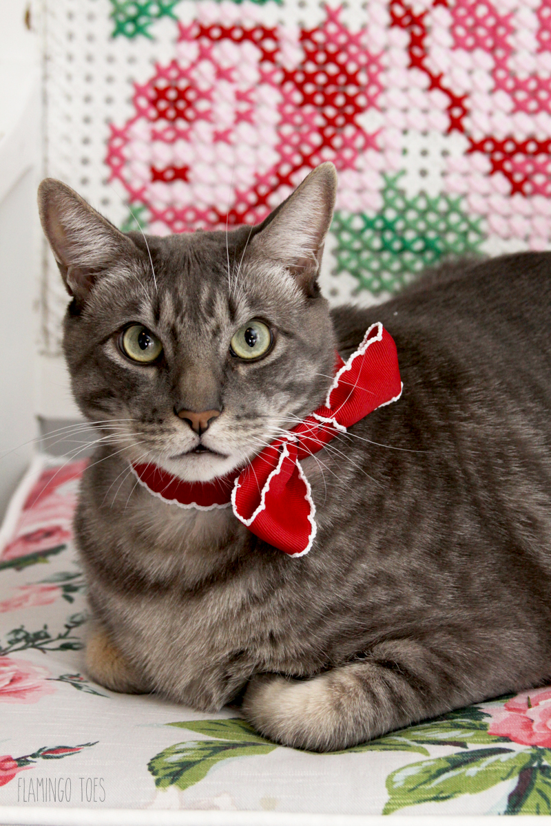 Kitty with Christmas Bow