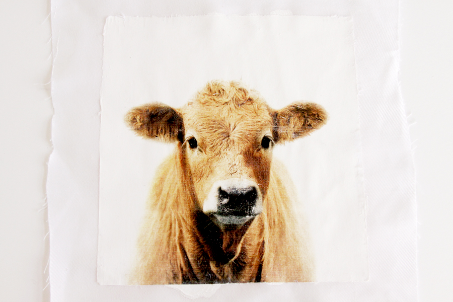 Cow Photo Mod Podge Transfer
